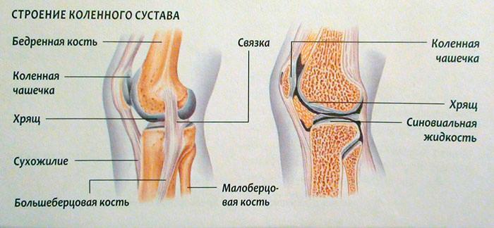 Размеры хрящей в коленном суставе