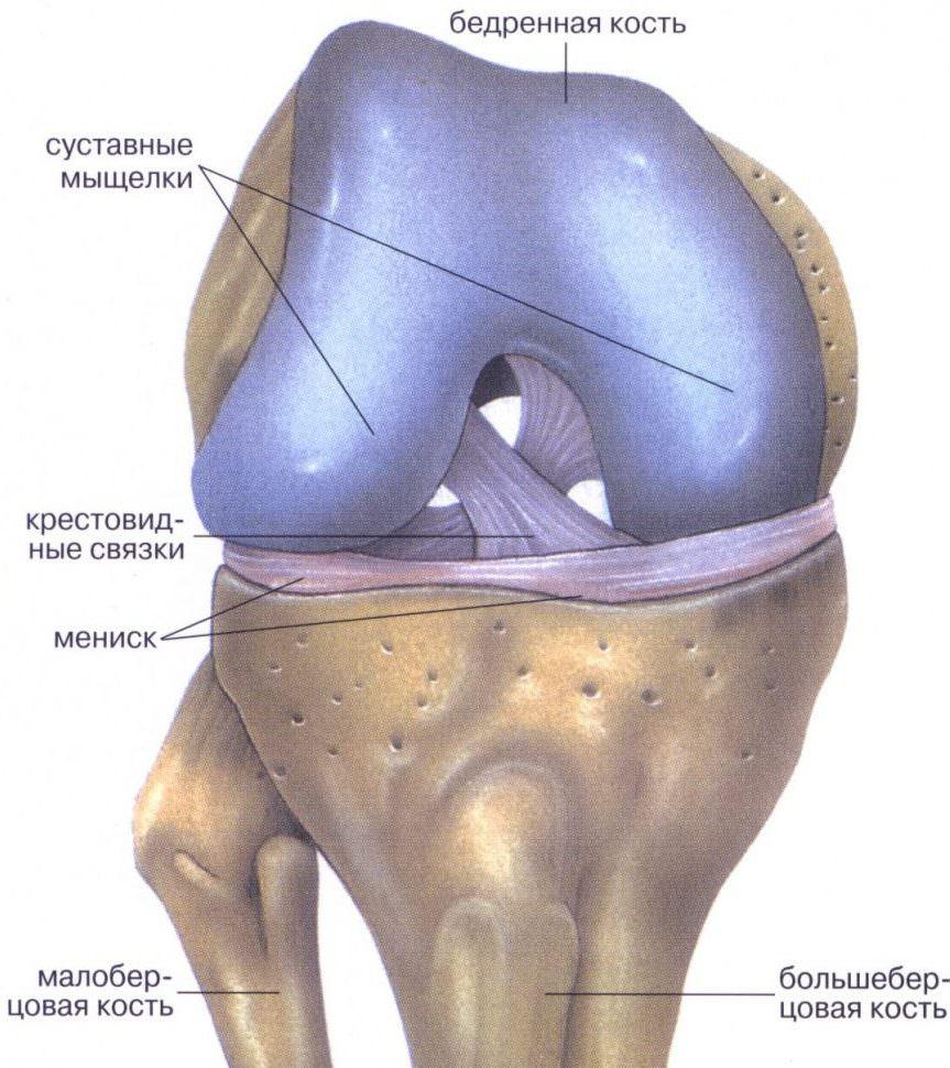 Что делать при воспалении мениска коленного сустава