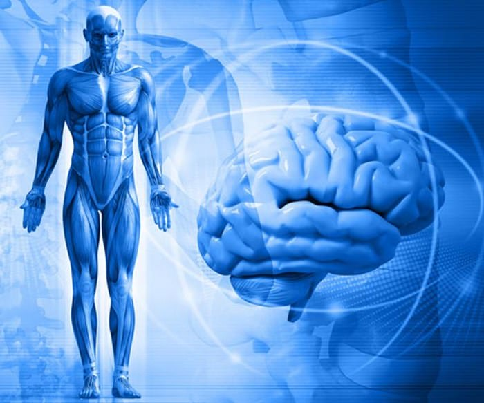 Связь боли с мозгом