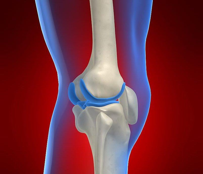 Фото строения колена внутри
